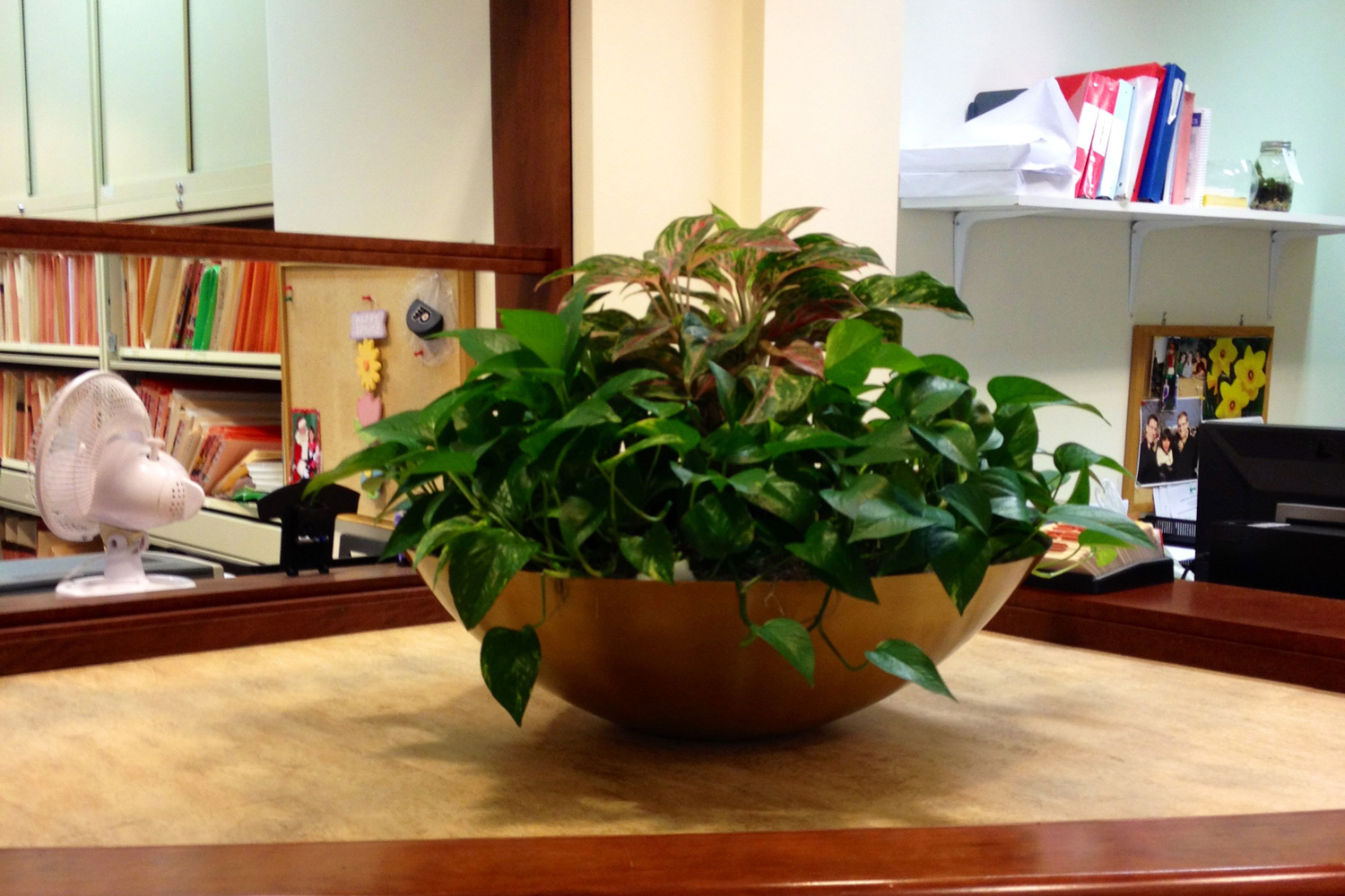Indoor Tropical Plants For Offices Interior Landscaping