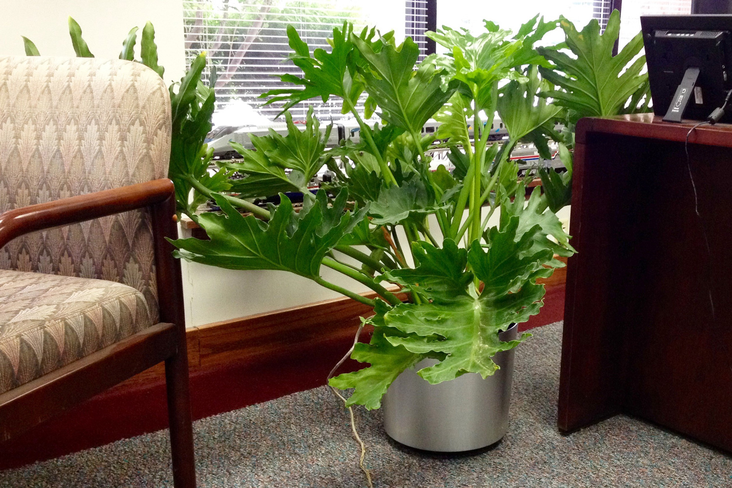 indoor tropical plants for offices  interior landscaping company, Natural flower
